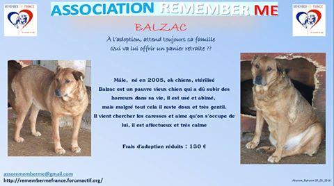 BALZAC - mâle croisé- taille moyenne né en 2008  (PASCANI) - en FA chez Yazou (Belgique) adopté par Cindy (Belgique) - Page 2 Balzac13