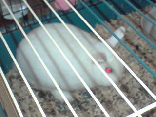 Dosage nourriture lapin nain P2707011