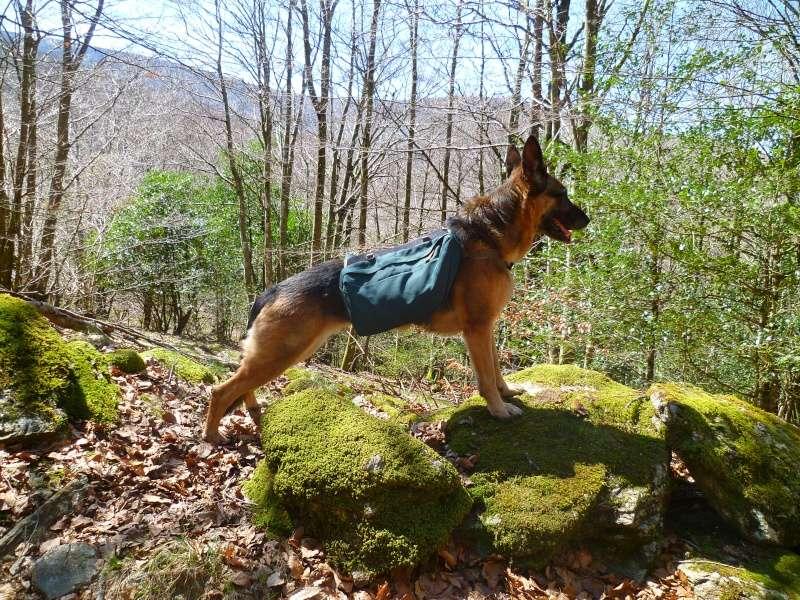 Trek - itinérance avec un chien - Page 2 P1050310