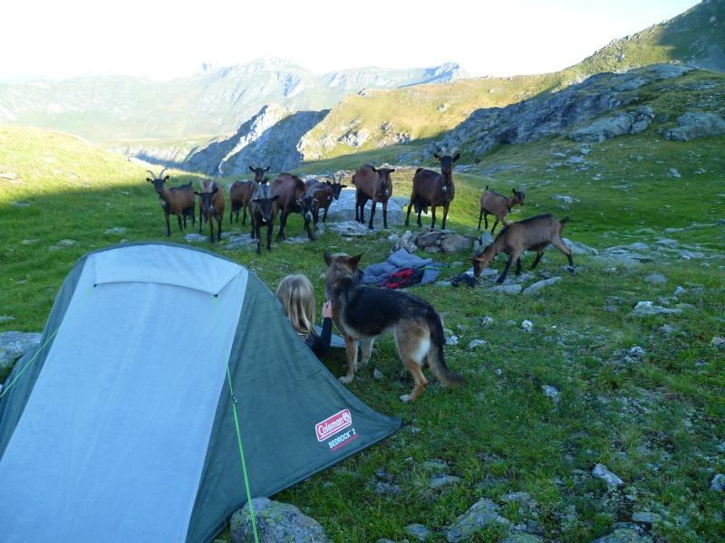Trek - itinérance avec un chien P1050911