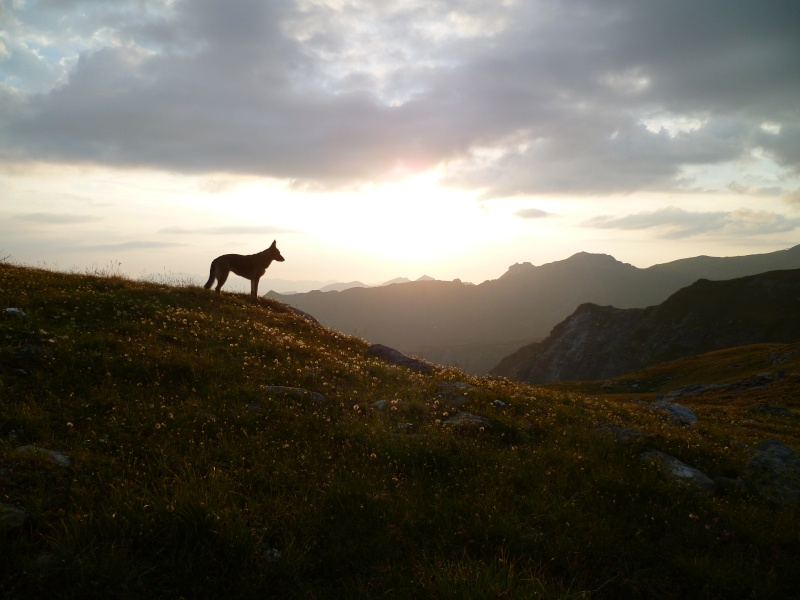 Trek - itinérance avec un chien P1050912
