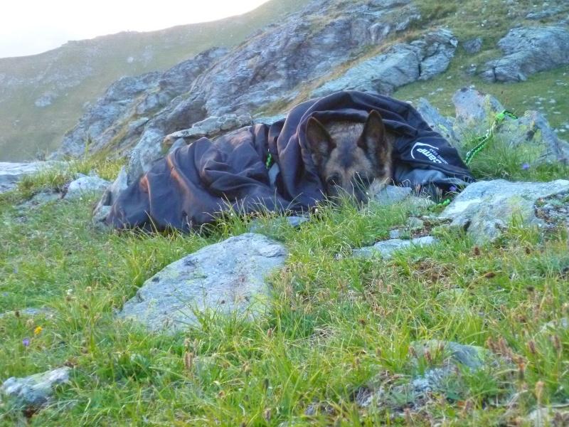 Trek - itinérance avec un chien P1050913