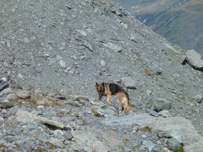 Trek - itinérance avec un chien P1060010