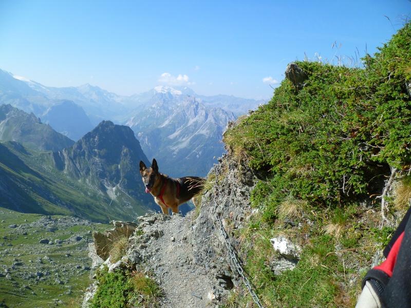 Trek - itinérance avec un chien P1060011