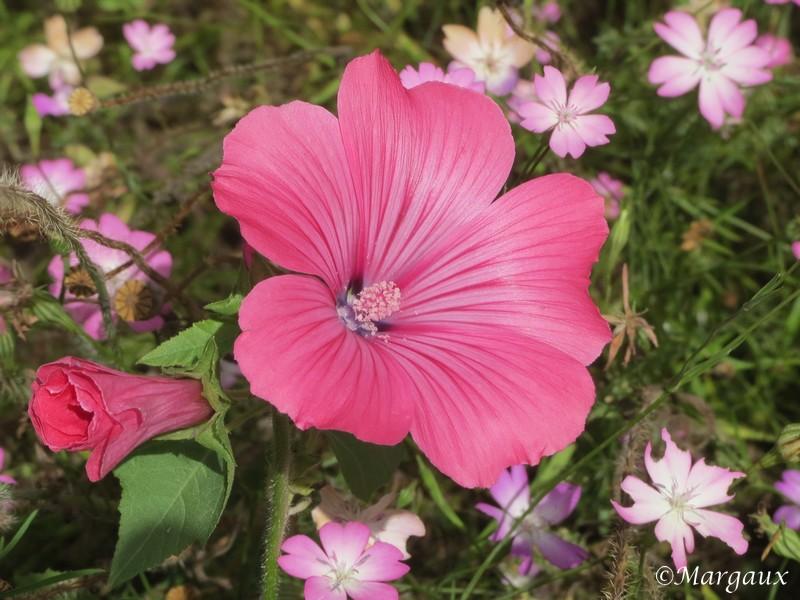 Fleurs En_80015