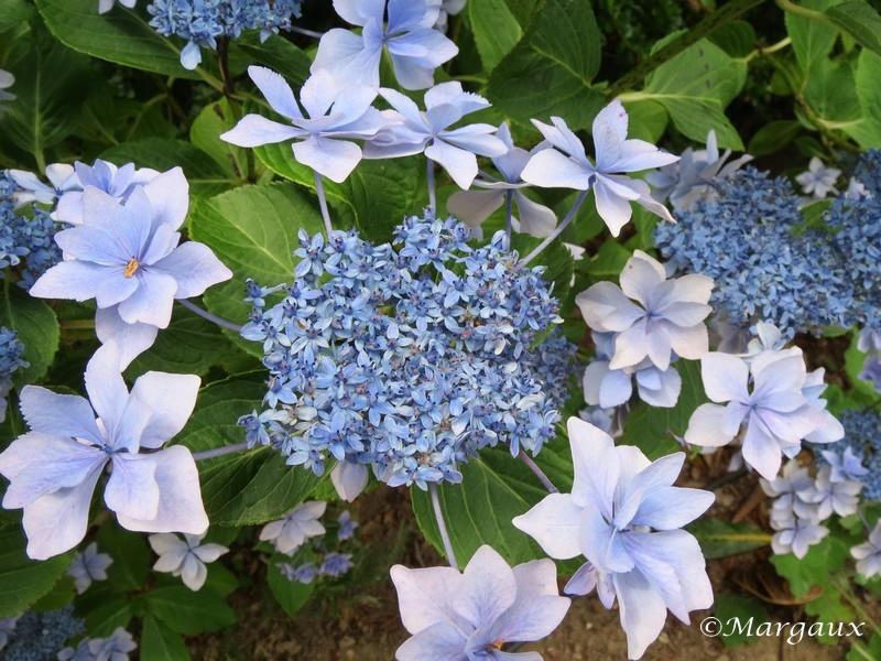 Fleurs Img_4010