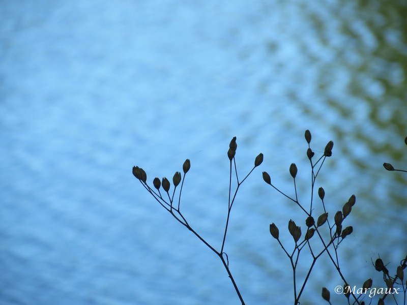 Simplement Img_5012