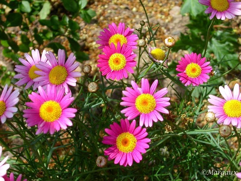 Fleurs Jardin11