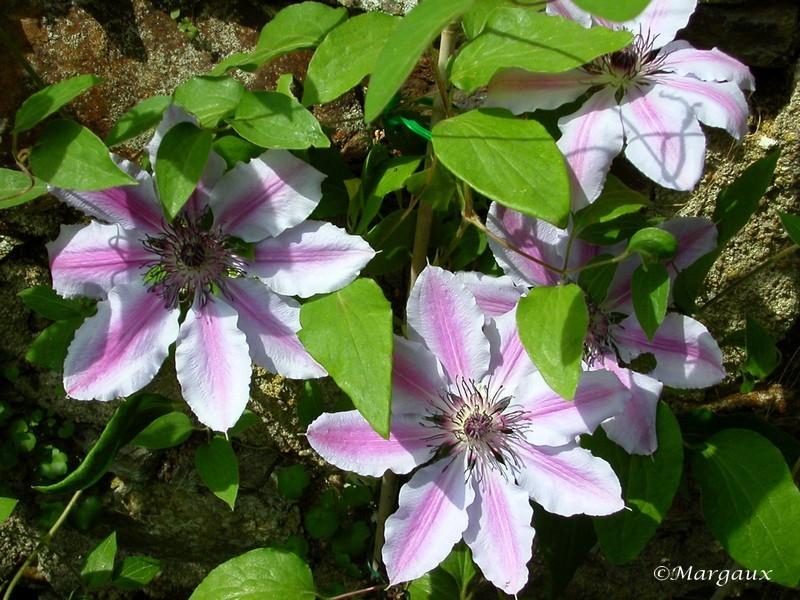 Fleurs Jardin12