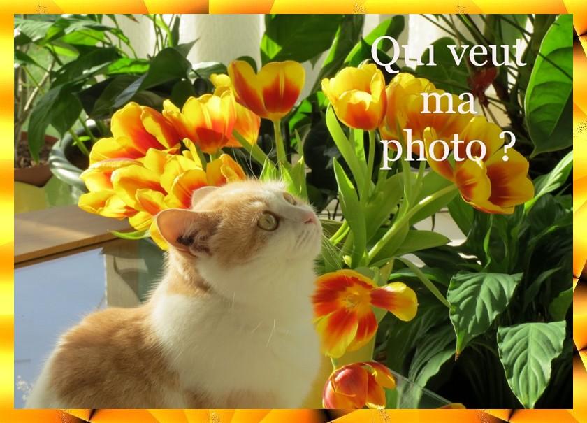 Photos pour fond d'écran Lyly10
