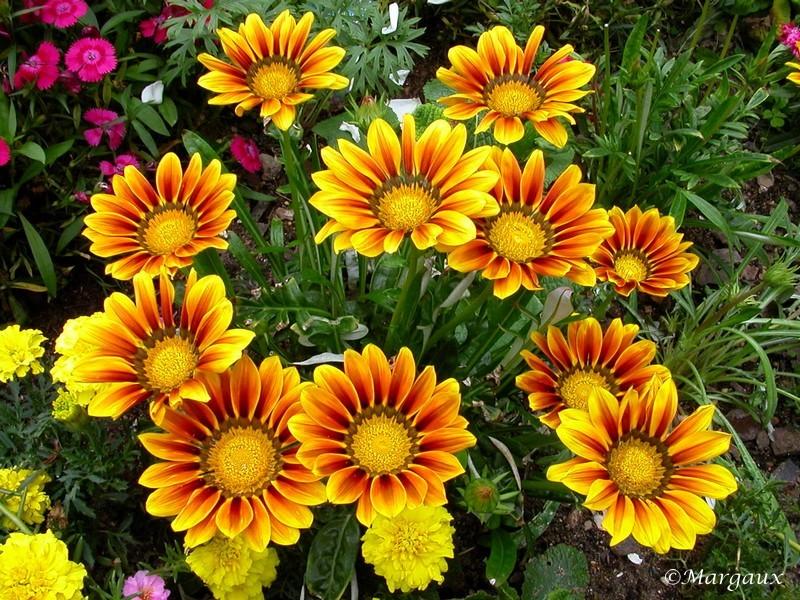 Fleurs Panora10