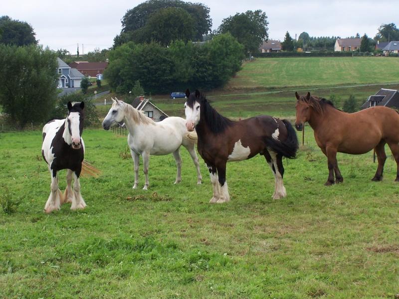 voiçi les 4 chevaux 07-08-11