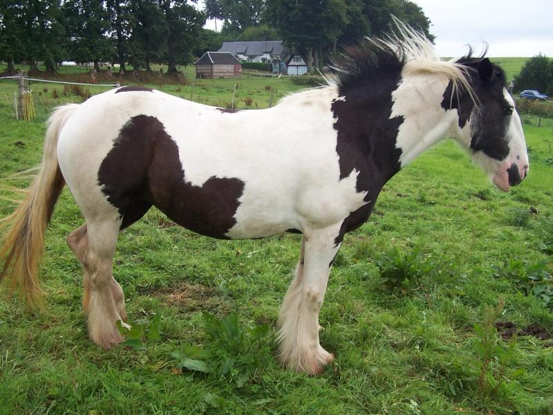 voiçi les 4 chevaux 07-08-15