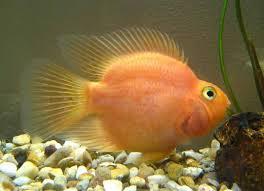 Séparation de poissons Poisso10