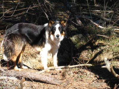 présentation de JUSS, chien traumatisé  - Page 6 Img_9726