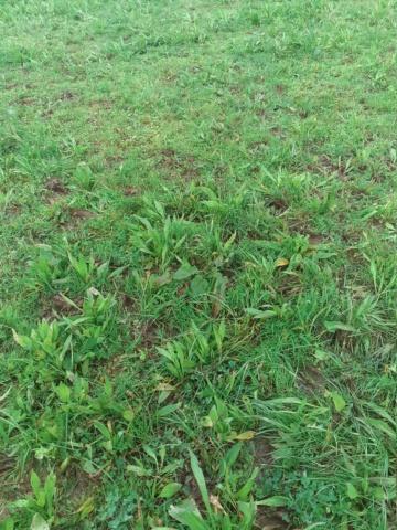 Mise à l'herbe....  - Page 2 20200214