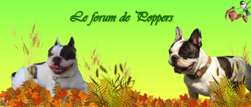 Le forum de Poppers