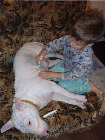 ne jamais laisser un chien seul avec un enfant! Getatt10