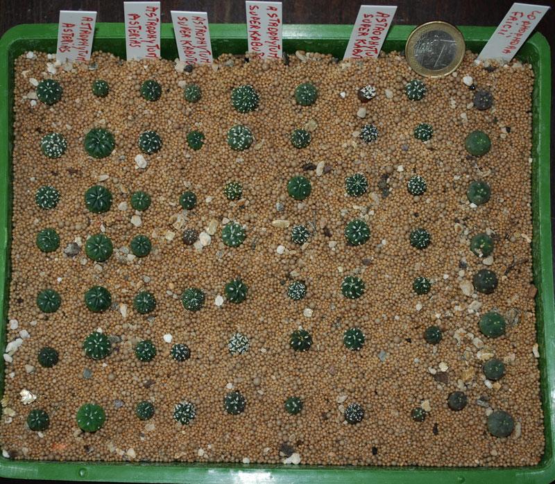 Semis de cactus 2009 chez Aboun 14-aoa13
