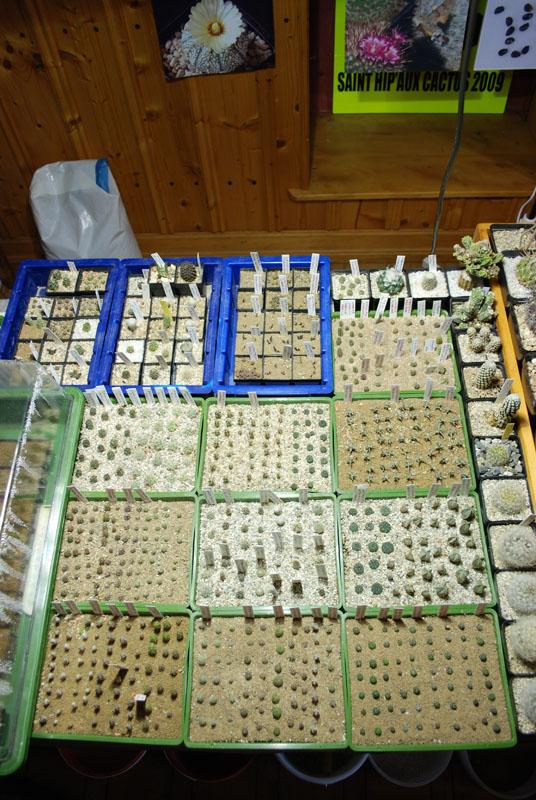 Semis de cactus 2009 chez Aboun Dsc_0048