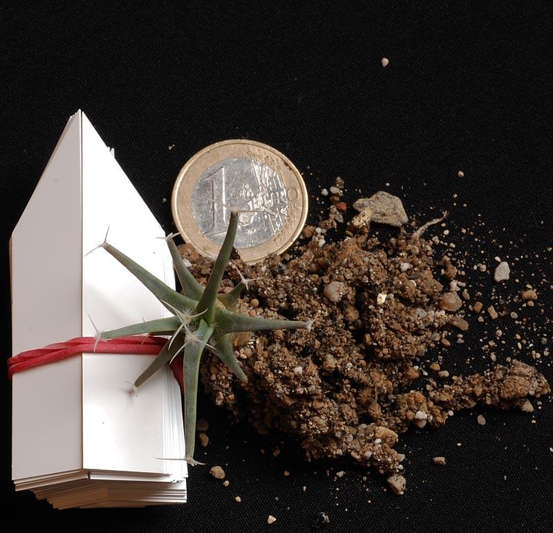 Semis de cactus 2009 chez Aboun Lechte11