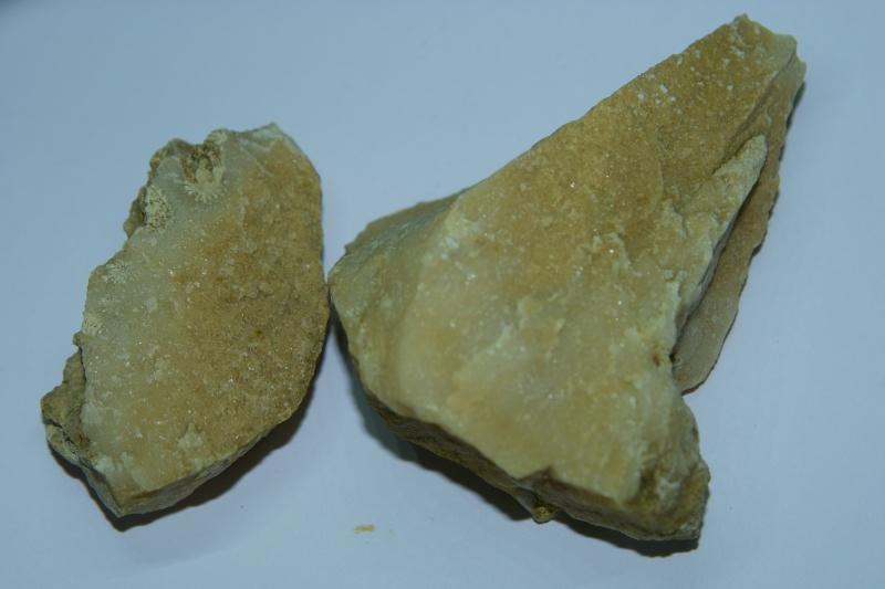 [Pinnigena sp.] fossile à identifier Calcai10