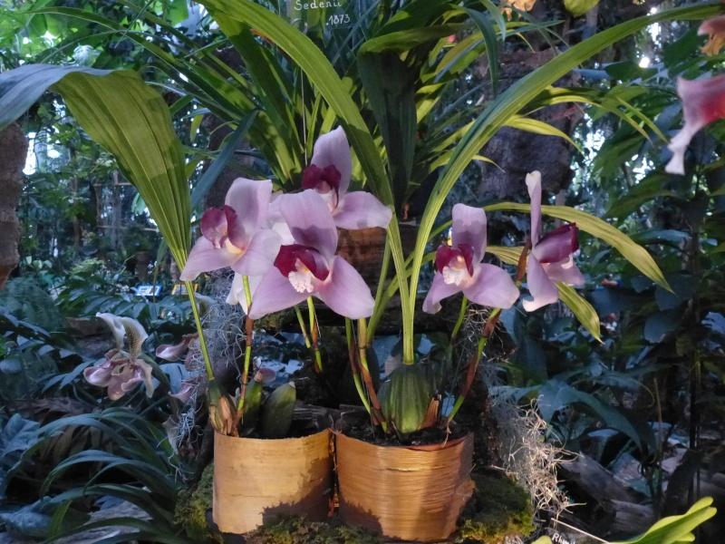 1001 Orchidées au jardin des Plantes Février 2016 Lycast10