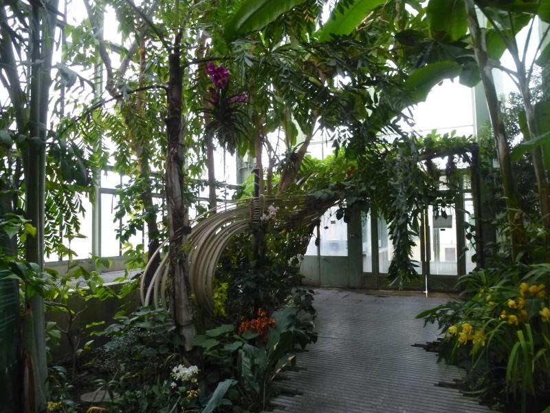 1001 Orchidées au jardin des Plantes Février 2016 P1170310