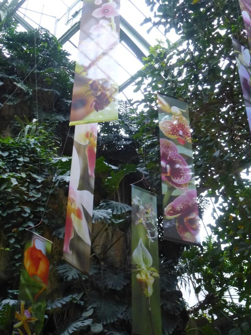 1001 Orchidées au jardin des Plantes Février 2016 P1170311