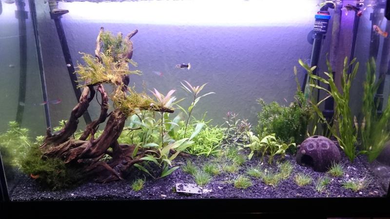 Un post sur les algues filamenteuses ?! Quelle originalité ! Dsc_0011