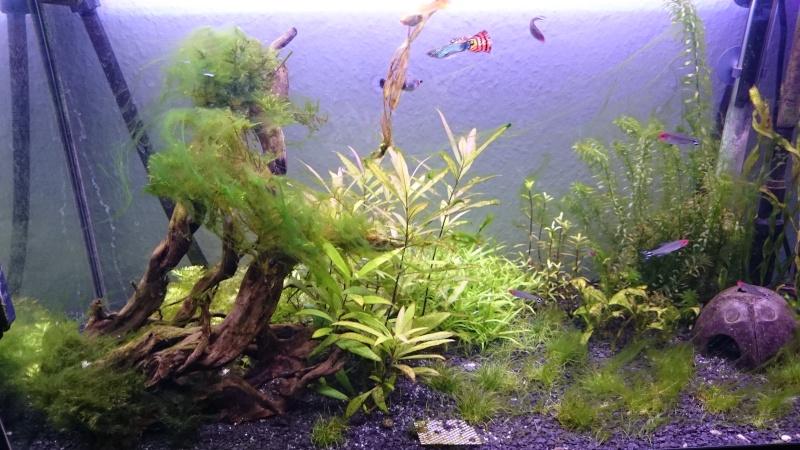 Un post sur les algues filamenteuses ?! Quelle originalité ! Dsc_0012
