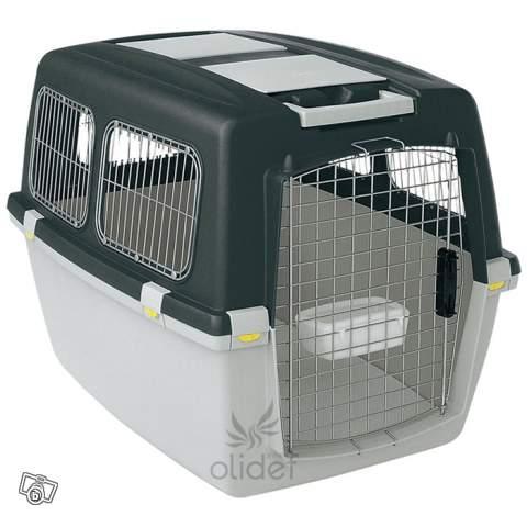 taille - Quel taille de cage faut-il pour un border? - Page 3 13146410