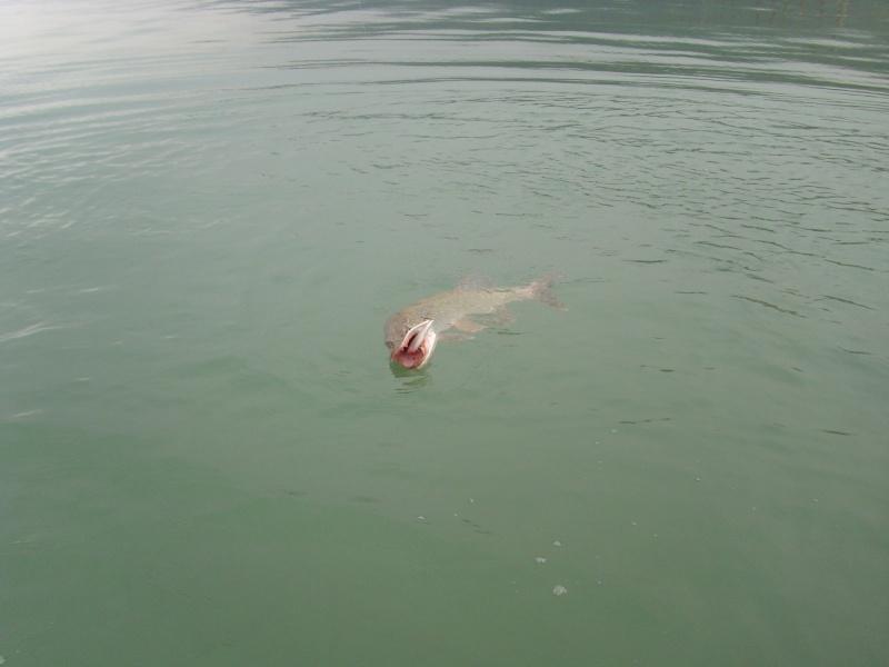 petite viré au lac d'Aiguebelette Img_2742
