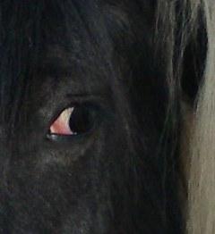 le blanc de l'oeil paraissant rouge? Oeil10
