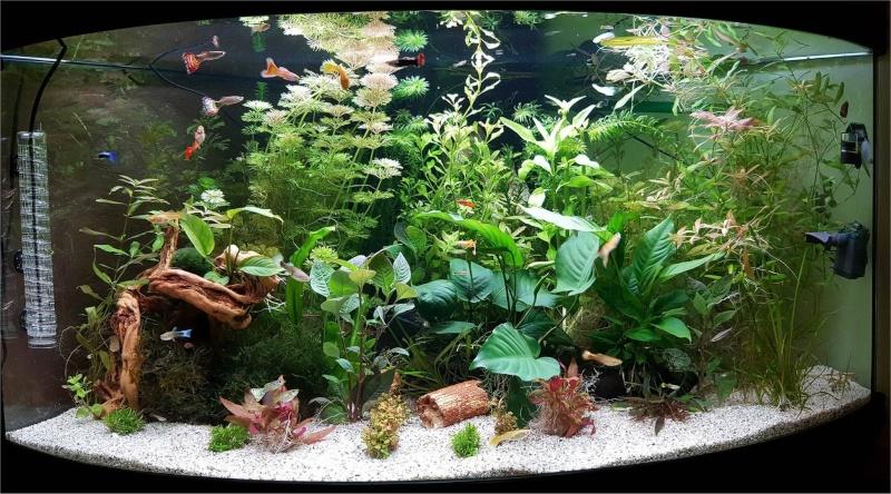 Mon aquarium , quel changement. Merci les amis du forum  !!! Aqua_210