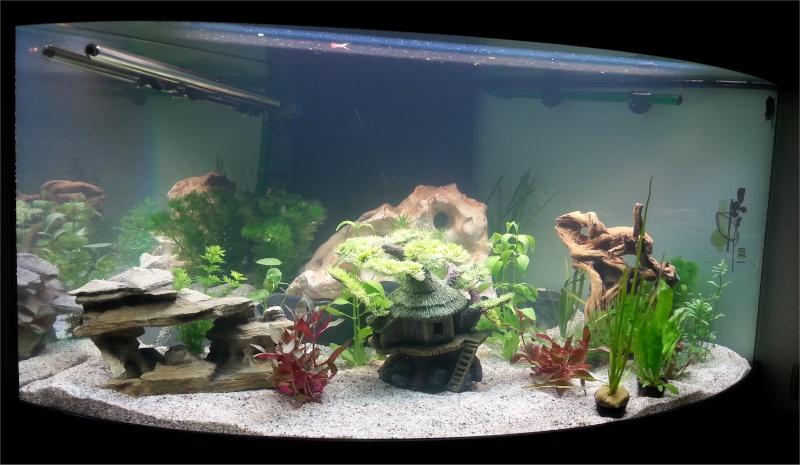Mon aquarium , quel changement. Merci les amis du forum  !!! Aquari10