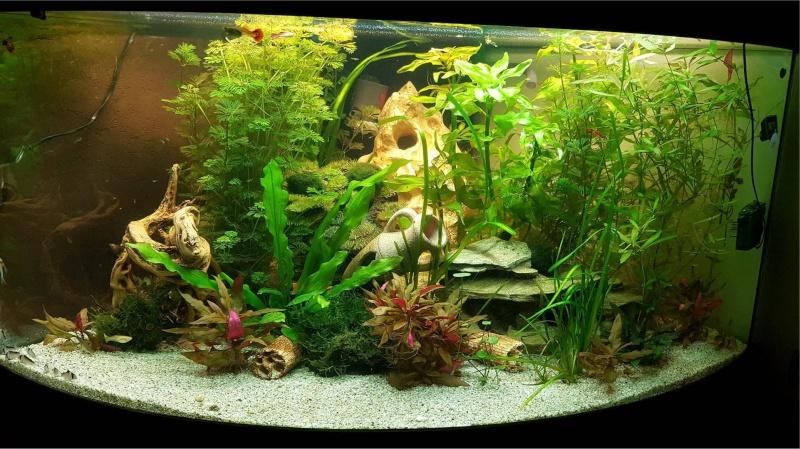 Mon aquarium , quel changement. Merci les amis du forum  !!! Bac_2011