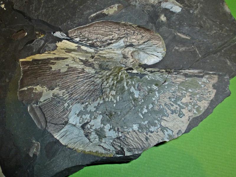 Bibliographie et sites web sur la  paléobotanique Post-212