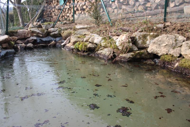 Agrandissement du bassin Img_4115