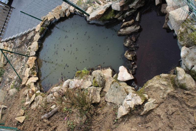 Agrandissement du bassin Img_4116