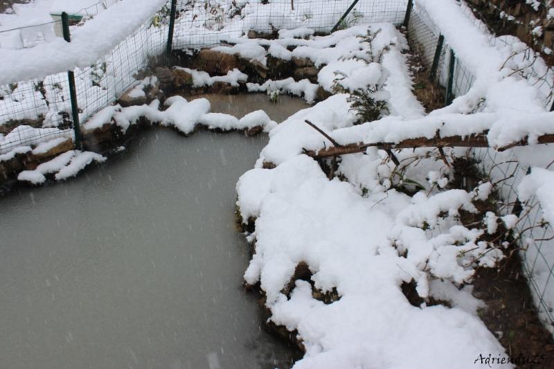 Agrandissement du bassin Img_4643