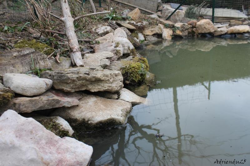 Agrandissement du bassin Img_4716