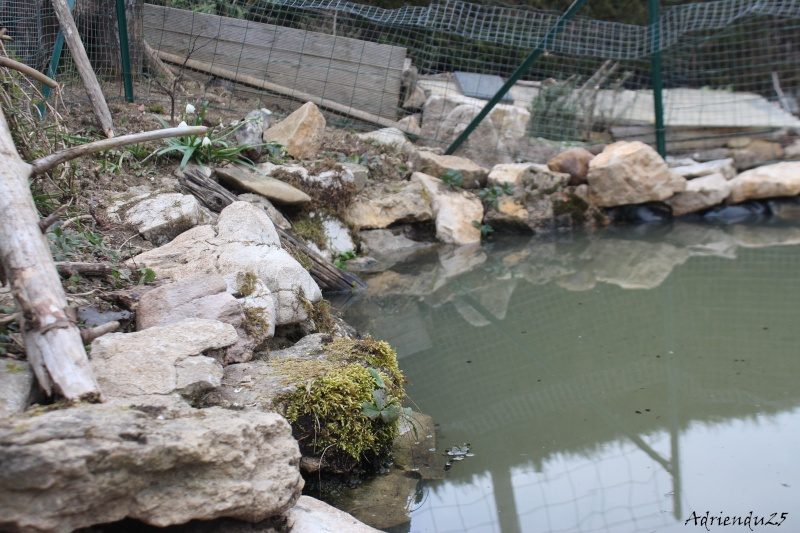 Agrandissement du bassin Img_4717