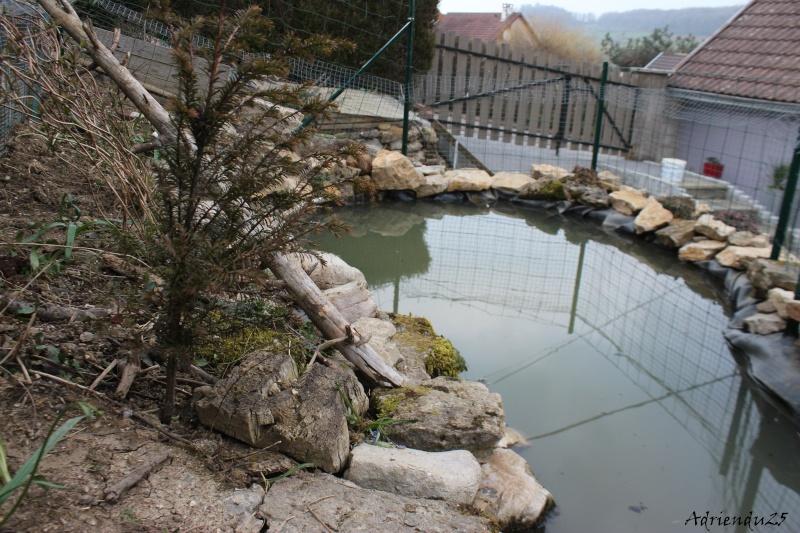 Agrandissement du bassin Img_4718