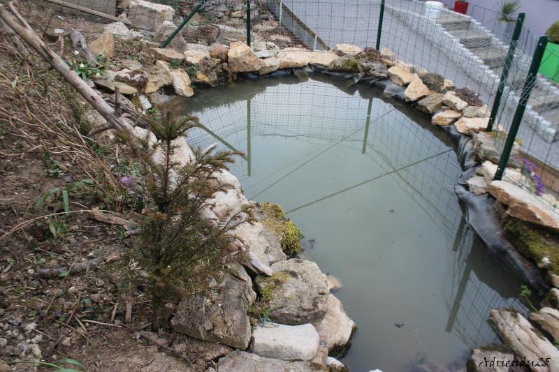 Agrandissement du bassin Img_4719