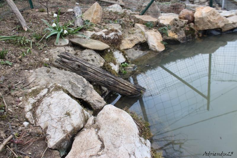 Agrandissement du bassin Img_4721