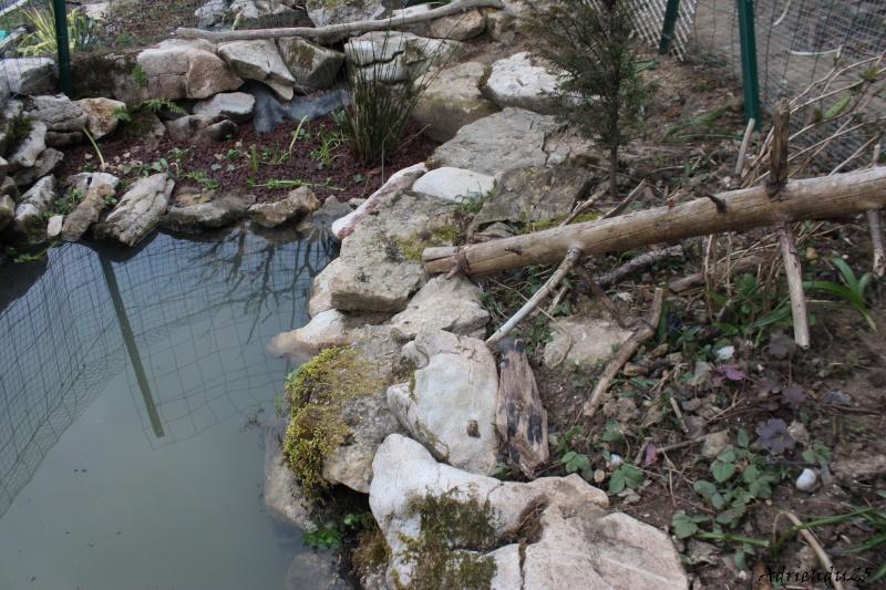 Agrandissement du bassin Img_4722