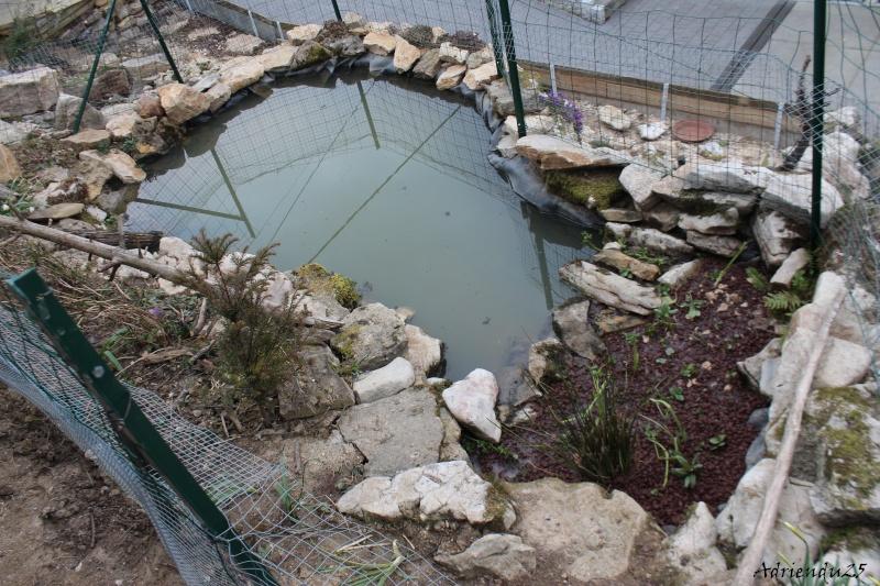 Agrandissement du bassin Img_4723
