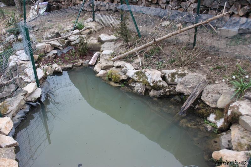 Agrandissement du bassin Img_4725