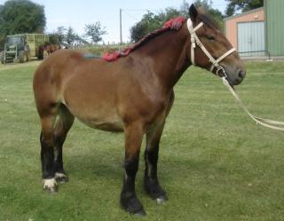 Commencer une partie sur Horse Life Ardenn10